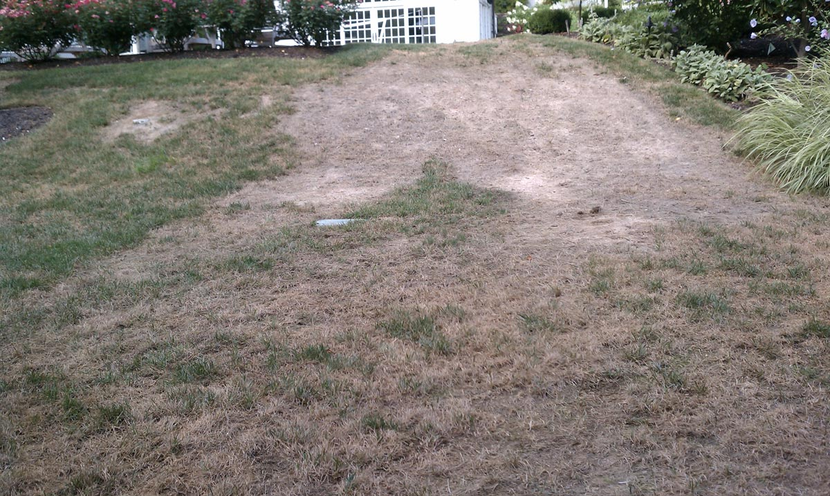 Lawn Renovation Before