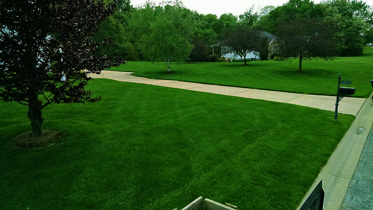 Front Yard and Driveway