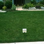 Front Lawn with Walkway