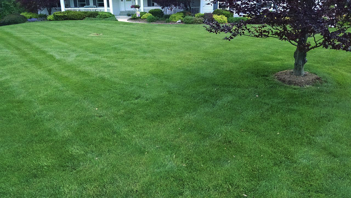 Residential Front Yard