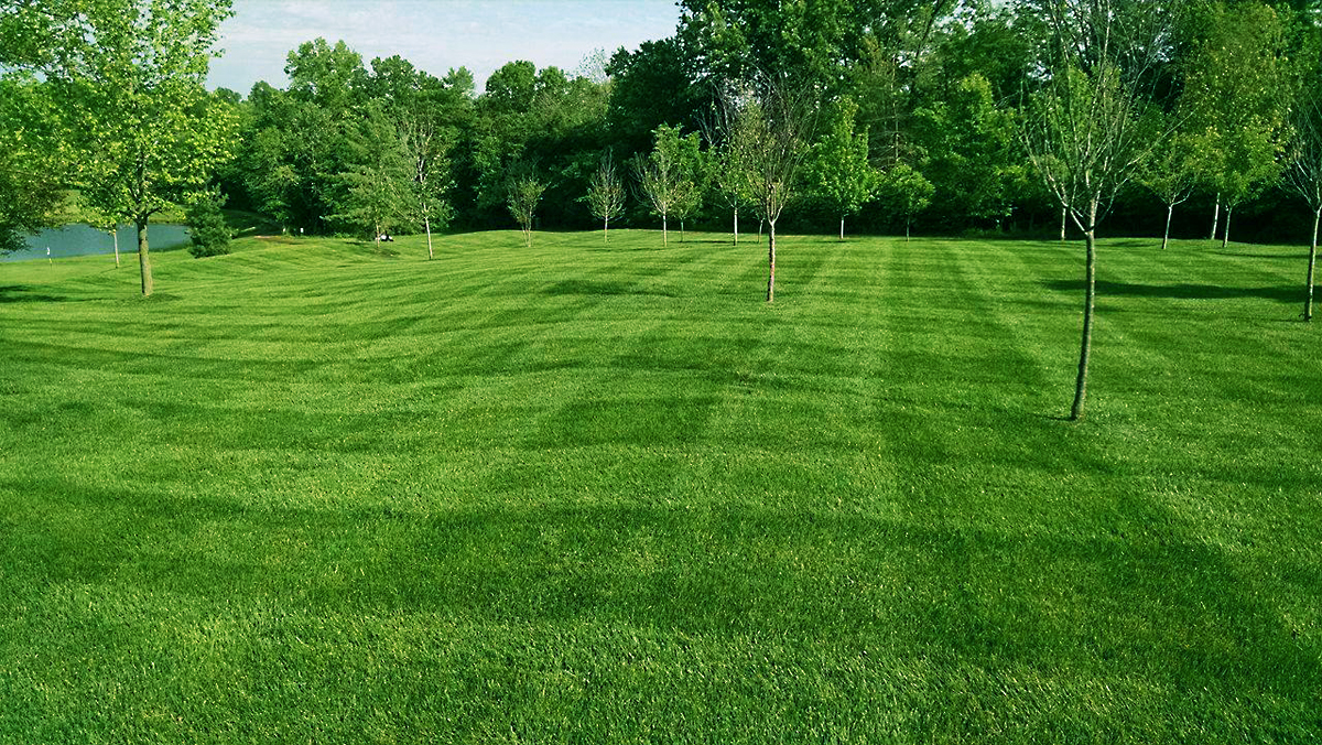Lawn with Decorative Trees