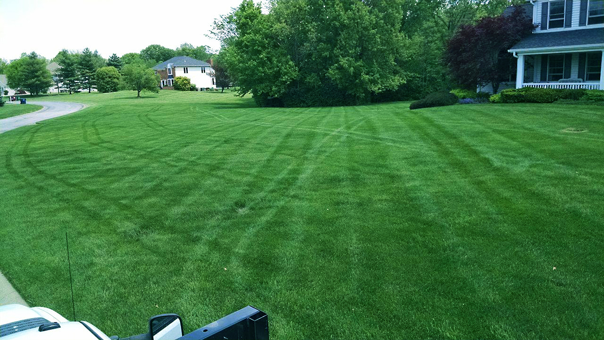 Mowed and Fertilized Lawn