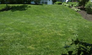 Lawn Renovation After